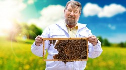 The-Sweet-Life-of-a-Honeybee